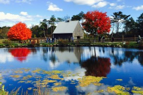 Eat Like A New Englander This Fall